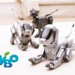 Sony Entertainment Robot ERS-110